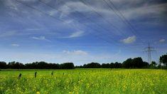 Lista de alimentos transgénicos aprobados en Europa: Monsanto, Bayer y Dupont