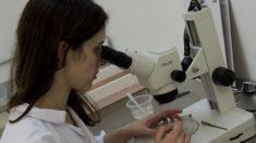 La vacuna terapéutica contra el sida se probará en pacientes en 2016