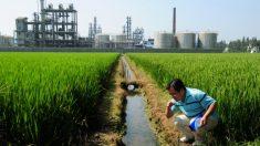 Inversiones chinas amenazan el medioambiente de América Latina