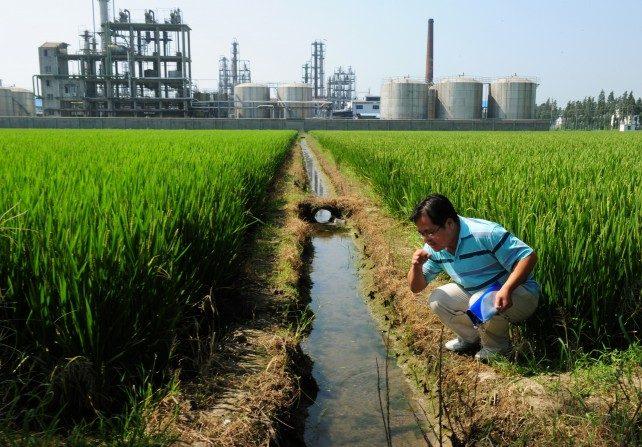 El activista del medio ambiente chino, Wu Lihong comprueba la calidad del agua en un canal de riego fuera de una fábrica de productos químicos al lado de un campo de arroz y al borde del lago Taihu en Yixing, provincia de Jiangsu, China, el 14 de septiembre de 2011. (MARCA RALSTON / AFP / Getty Images)