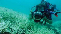 Mapa de pérdida del coral en el Golfo y Caribe alerta donde proteger con urgencia