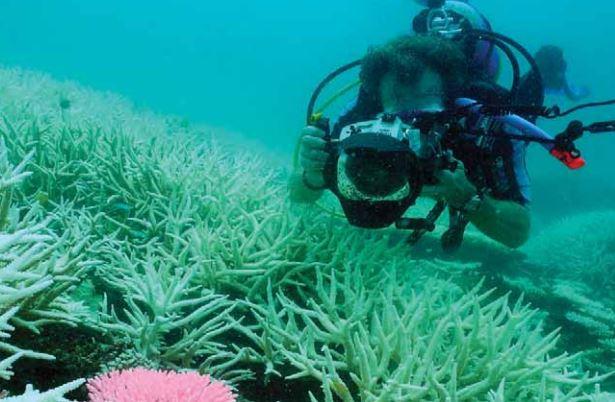 Para evitar el desastre ambiental y económico, científicos de NOAA instan a las autoridades de Florida, Bahamas, Cuba, Puerto Rico, República Dominicana, Islas Turcas y Caicos, y México, para que adopten medidas de protección de los arrecifes de coral. (NOAA)