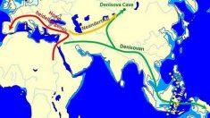 Confirman genes denisovanos en americanos y euroasiáticos del este