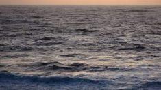 Extinción en océanos por breve baja de O2 tardará mil años en recuperarse