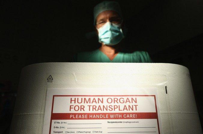 Foto ilustrativa: Un médico se para ante una caja de espuma de poliestireno vacía usada para el transporte de órganos humanos como parte de un evento de los medios en una sala de operación en la clínica Vivantes Neukoelln el 28 de septiembre de 2012, en Berlín, Alemania. (Sean Gallup / Getty Images)