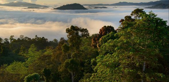 Bosques tropicales resultan contaminados por la actividad humana detectó estudio de Cambridge. (Rainforest)