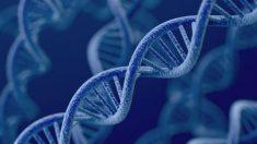 Conocer tu origen genético es una nueva tendencia (Vídeo)
