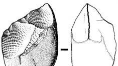 Sorprenden herramientas de 3,3 millones de años en Kenia, donde vivió el hombre Lomekwian