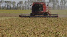 Los oscuros intereses de China sobre las tierras argentinas