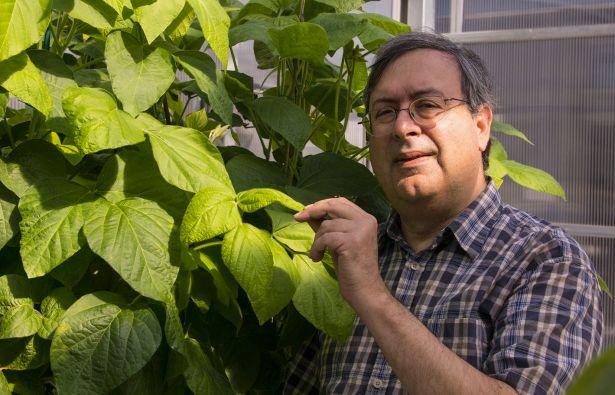Científicos sin transgénicos obtienen soja no alergénica, sin inhibidores nutricionales