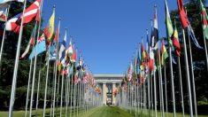 La ONU es llamada a actuar contra el tráfico de órganos en China