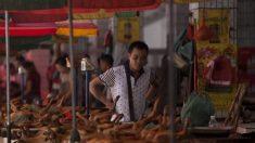 Indignación mundial por el Festival de Carne de Perro de Yulin