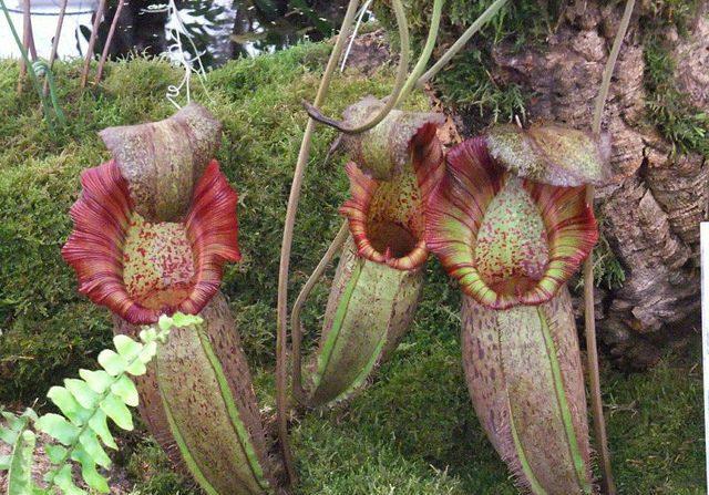 La planta carnívora (diarioecologia.com)