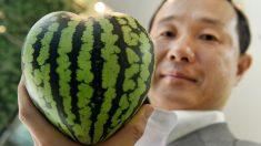 Las curiosas sandías en forma de cubo o corazón que sirven de adorno en Japón