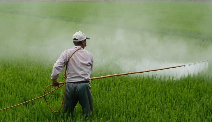 El 2,4-D (ácido 2,4-diclorofenoxiacético) comenzó a utilizarse en 1945 para el control de las malezas. Se emplea en cultivos de trigo, cebada, centeno, avena, maíz, sorgo, papa, caña de azúcar y arroz, entre otros. (Foto: Wuzefe-Pixabay)