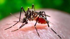 Confirman una tercera muerte producto de una rara enfermedad transmitida por mosquitos en EE. UU.