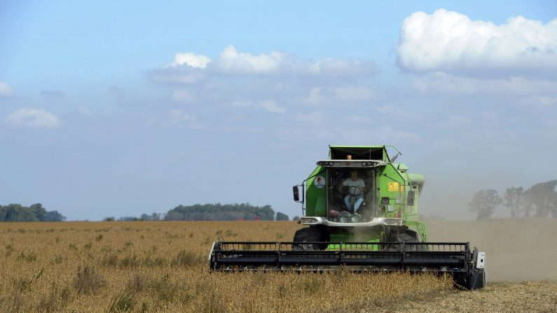 Un campo sembrado con soja transgénica se cosecha cerca de Gálvez , Santa Fe, unos 470 al noroeste de Buenos Aires el 11 de abril de 2012. (Photo credit should read JUAN MABROMATA/AFP/Getty Images)