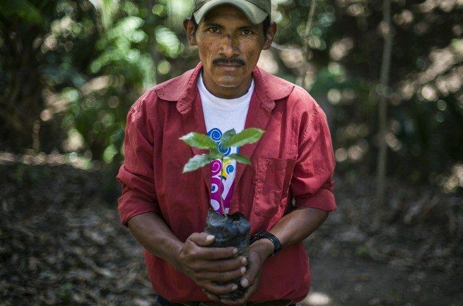 Cafetalero nicaragüens, Isacio López, de 40 años, muestra una de las nuevas plantas de café que utilizará para sustituir la erosión en una plantación cerca de Somoto, a 200 kms de Managua, el 26 de febrero de 2014. (Inti Ocon/AFP/Getty Images)