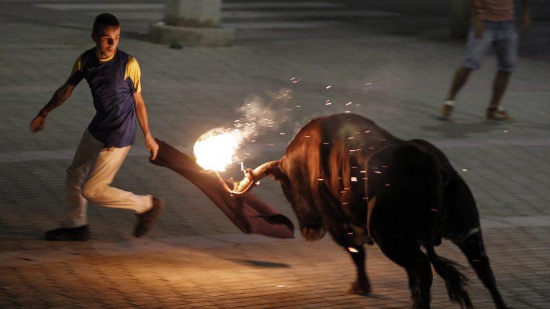 """Un hombre hace un pase en un """"Toro embolado"""" (toro de fuego) con bolas de material inflamable unido a sus cuernos durante una """"Peña Taurina"""", donde los aficionados taurinos se reúnen para perseguir a los toros por las calles de Meliana, cerca de Valencia el 1 de agosto, 2015 (Photo credit should read JOSE JORDAN / AFP / Getty Images)"""