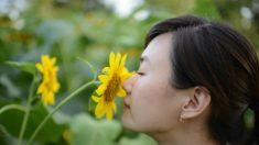 7 flores de la medicina china para mejorar tu salud y tu piel