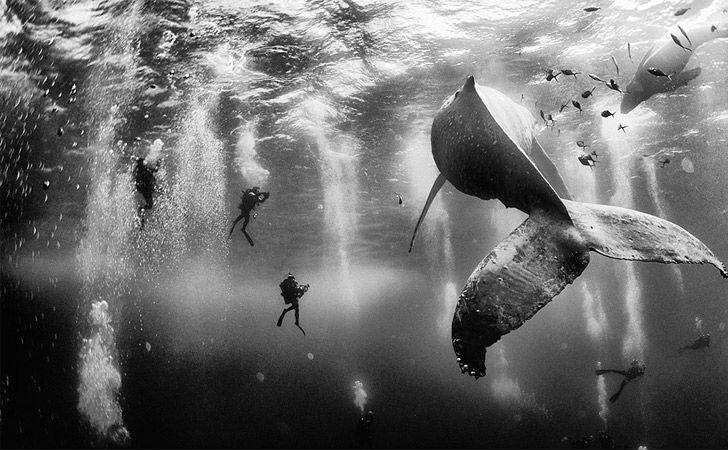 National Geographic dio a conocer las mejores 10 fotografías de viajes de este año