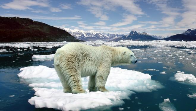 Los osos polares corren serio peligro por los deshielos en el Ártico. (veoVerde)