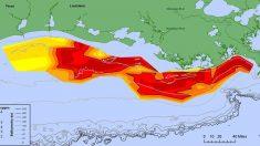 Zona muerta del Golfo era alarmante en 2014, en 2015 es 30% peor