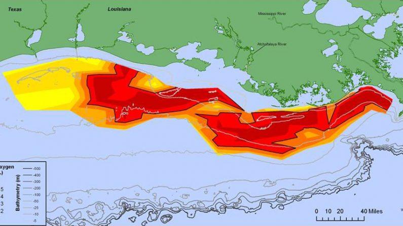 Era alarmante la zona muerta del Golfo de México en 2014. Imágenes del año 2015 muestran que ahora es casi el 30% peor que el año anterior. (NOAA)