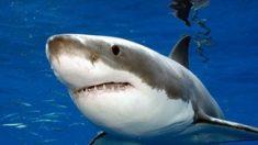 EE.UU: Tiburón muerde a una niña de 5 años en playa de Texas