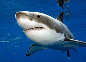 Tiburón (MiamiDiario)