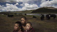 Régimen chino asegura que el Tíbet atraviesa una edad de oro