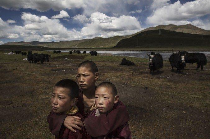 Jóvenes monjes tibetanos novicios en las praderas de un campo nómada, el 14 de julio de 2015, en la meseta tibetana, condado de Madou, Qinghai, China. (Kevin Frayer/Getty Images)