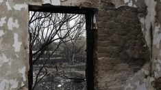 Los lobos vuelven a Chernóbil a causa de la ausencia humana