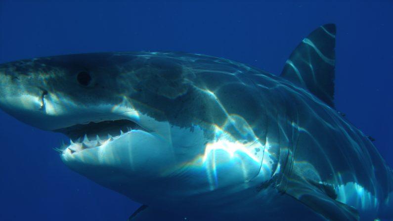 ¿Se aproxima una sexta extinción de los animales marinos? (imagen wikipedia.org)