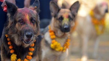 Kukur Tihar, el festival de Nepal que agradece a los perros por su amistad