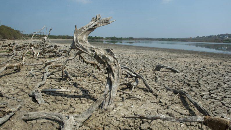 La sequía afecta a Colombia en Puerto Colombia, en el departamento del Atlántico, Julio de 2014. Recientemente, el gobierno ha asignado 18 millones de dólares para luchar contra una de las peores sequías en la historia de Colombia, provocada por el fenómeno climático de el Niño.       (EITAN ABRAMOVICH/AFP/Getty Images)