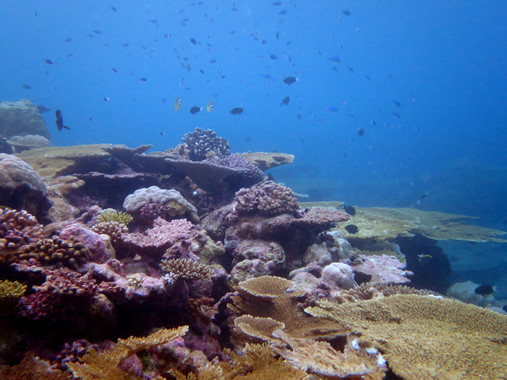 La biodiversidad de los océanos debe ser resguardada de nosotros mismos. (foto Mark Spalding)