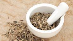 Ginseng siberiano para energizarse y obtener resistencia