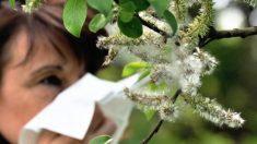 Incremento de alergias en México son un problema de salud publica