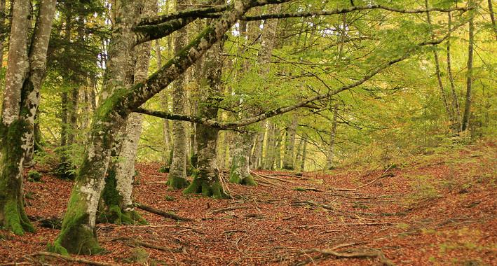 Selva de Irati en Navarra. / Wikipedia