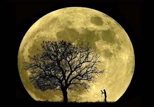 La luna influye en las plantas! ¿Qué hacer en cada fase lunar ...