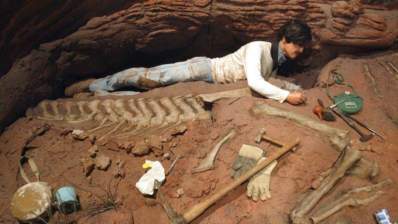 Hallan en Argentina restos de un dinosaurio gigante desconocido. (Tim Boyle/Getty Images)