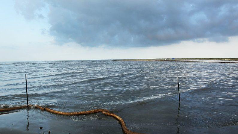 Serpientes invaden costas y fuerzan cierre de playas de ríos en Argentina. (John Moore/Getty Images)