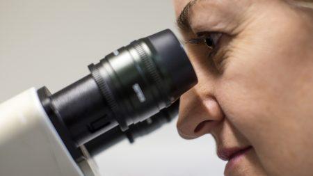 Observan en vivo evolución de un cáncer desde la primera célula