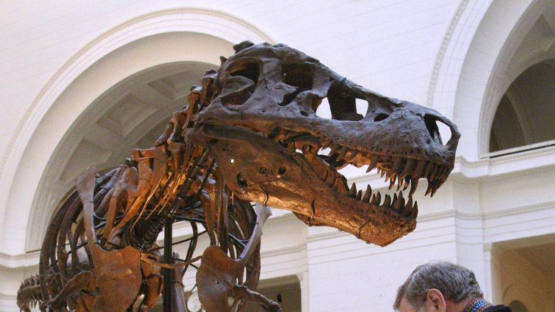 El Amphicoelias Fragillimus, el dinosario más grande de la historia, quizás nunca existió. (Tim Boyle/Getty Images)