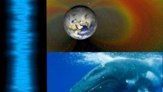Los sonidos en el espacio se asemejan al de las ballenas jorobadas: Escuche aquí