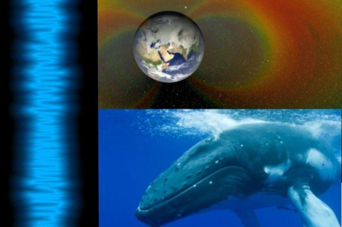 """Las olas de la """"canción"""" captadas por la NASA son prueba de sondeos hechos en los cinturones de Van Allen, el 05 de septiembre de 2012. (NASA). Arriba a la derecha: Representación artística de los cinturones de Van Allen que rodean a la Tierra. Abajo a la derecha: Una ballena jorobada. (Miblue5/iStock)"""