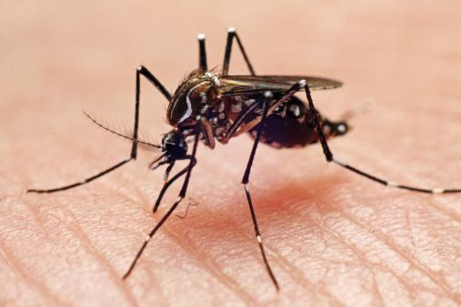 Qué medidas debemos tomar para evitar las enfermedades que transmite el mosquito Aedes Aegypti. (Foto: www.gettyimages.es)