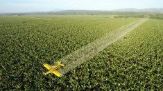 Argentina: piden restricciones a los agroquímicos procedentes de China