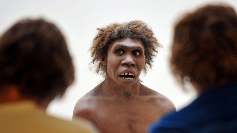 Investigadores estadounidenses han encontrado relaciones entre genes heredados de los neandertales y rasgos clínicos de los humanos actuales que afectan al sistema inmunitario, la piel, el cerebro y la salud reproductiva. Entre los hallazgos más sorprendentes, se ha desvelado que un trozo específico de ADN neandertal aumenta el riesgo de adicción a la nicotina y que algunas variantes influyen en la probabilidad de sufrir depresión (Photo credit should read PIERRE ANDRIEU/AFP/Getty Images)
